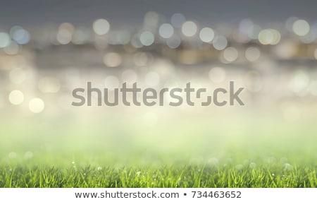 Stadion illusztráció futball absztrakt mező szín Stock fotó © colematt