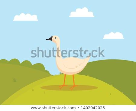 Farm Bird on Grass, Goose Eating, Farming Vector Stock photo © robuart