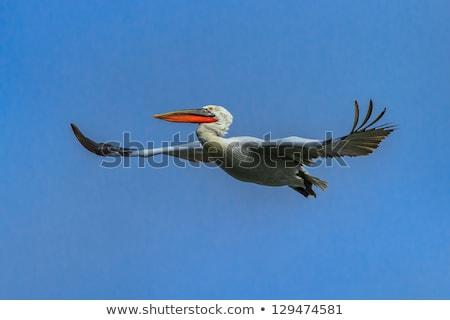Dálmata cabeza primer plano aves sueno zoológico Foto stock © AlessandroZocc