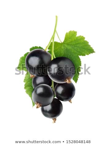 Yeşil yaprakları siyah frenk üzümü beyaz lezzetli yalıtılmış Stok fotoğraf © lypnyk2