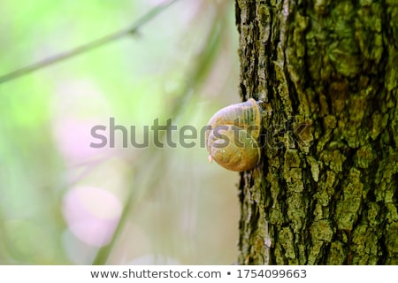 Sleeping snail stock photo © duoduo