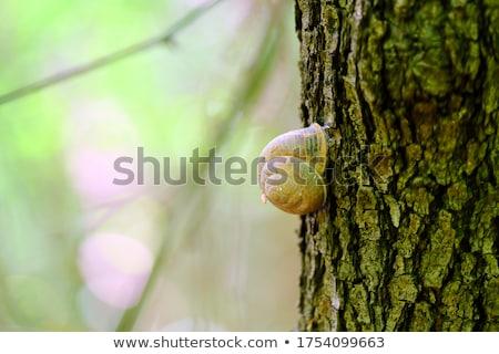 Sleeping snail stock photo © duoduo