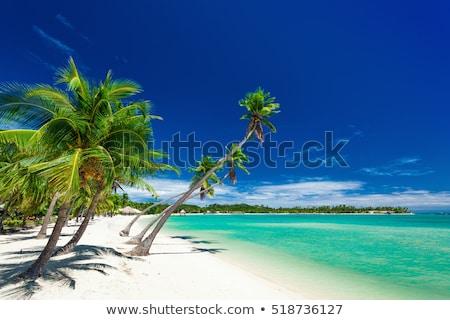 Fidzsi-szigetek tengerpart gyönyörű szigetek égbolt fa Stock fotó © leeser
