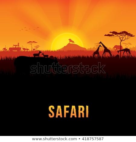 zsiráfok · naplemente · Afrika · fű · erdő · természet - stock fotó © experimental