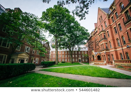 harvard yard in cambridge stock photo © prill