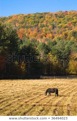 Stock photo: Idyllic pen with horse grazing