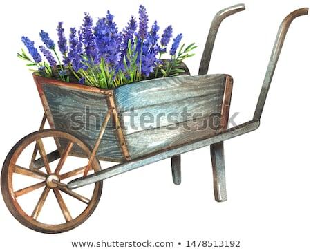 Houten kruiwagen klassiek geïsoleerd witte speelgoed Stockfoto © ivonnewierink