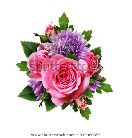 pink asters flowers bouquet, isolated on white  Stock photo © inxti
