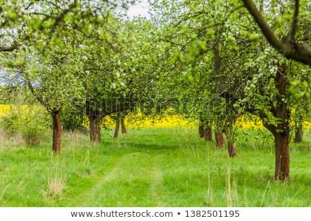 フィールド · 夏 · 青 · 地平線 · 農業 - ストックフォト © sarahdoow