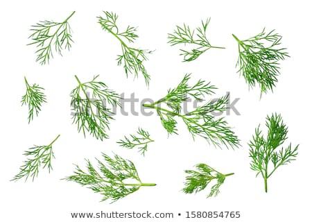 Branch of green dill Stock photo © boroda