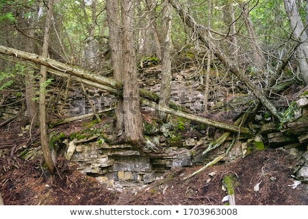 Stock photo: Fallen tree in a forest, Tobermory, Ontario, Canada