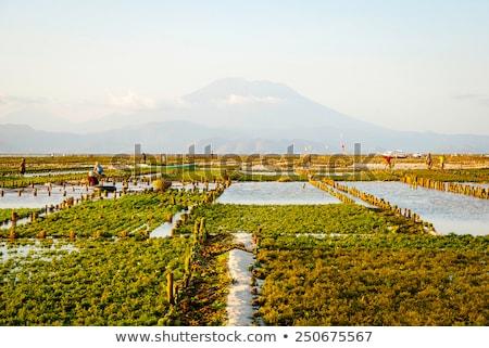 Granja campo Indonesia agua alimentos trabajo Foto stock © dinozzaver