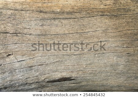 Wood surface with a dry and wear marks stock photo © hd_premium_shots