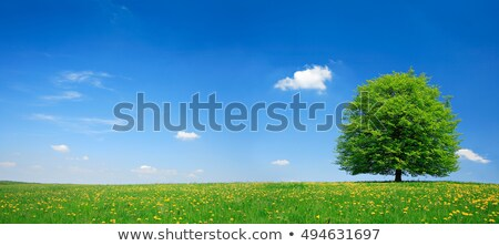 meadow full of dandelion stock photo © fanfo