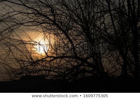 şube gün batımı yeşil yaprakları güneş deniz yaprak Stok fotoğraf © bendzhik