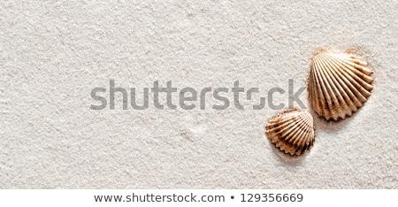 durva · homok · textúra · makró · magvak · természet - stock fotó © madelaide