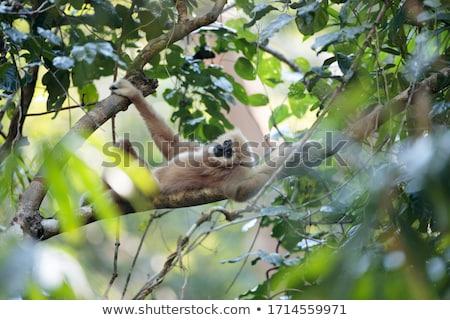 Atrás árvore grama floresta retrato preto Foto stock © chris2766