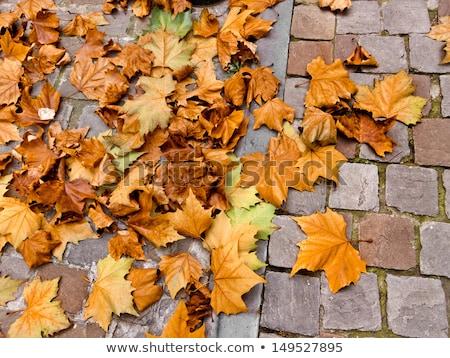 pattern of wet cobble stone on sidewalk with leaf Stock photo © meinzahn