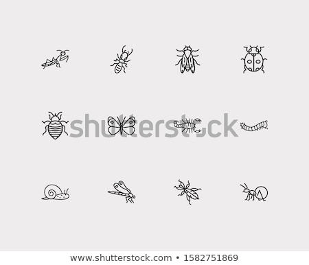 Scorpione icone illustrazione bianco rosso rosa Foto d'archivio © bluering