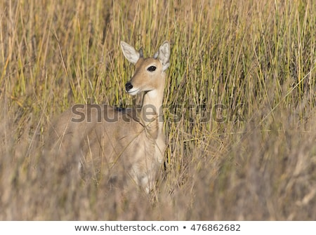 çita yeme park Güney Afrika hayvanlar fotoğrafçılık Stok fotoğraf © simoneeman