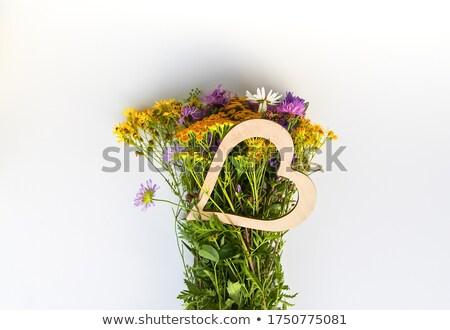 keverék · szívek · növények · itt · választék · szerető - stock fotó © theblueplanet