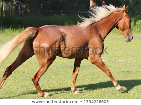 Paard aardbei kleurrijk grillig illustratie Stockfoto © lenm