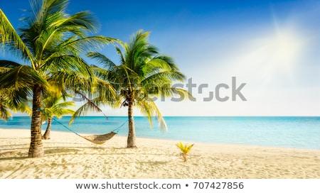 Zdjęcia stock: Hamak · tropikalnej · plaży · piaszczysty · dwa · okulary · whisky