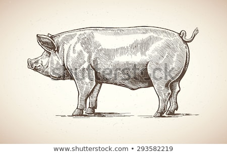 domestic pigs pigs on a farm in the village stock photo © freeprod