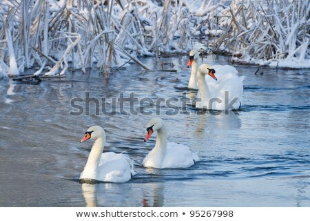 buz · dondurulmuş · nehir · su · yüzeyi · kış · sezonu · soyut - stok fotoğraf © boggy