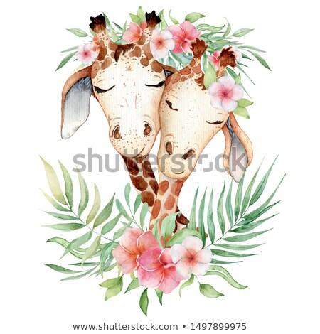 キリン 花 フレーム 実例 背景 芸術 ストックフォト © colematt