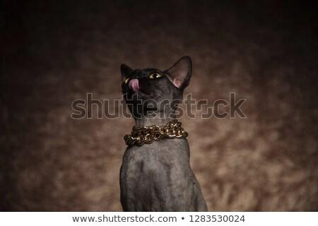 głodny · kotek · spodek · pełny · mleka · żywności - zdjęcia stock © feedough