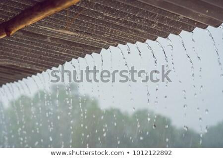 Tropikal yağmur aşağı çatı su doğa Stok fotoğraf © galitskaya