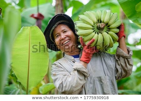 農家 バナナ オーガニック フルーツ 農民 手 ストックフォト © mythja