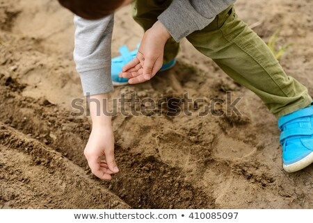 Child sowing vegetables in the home garden. Sow carrots, beets, fennel. Spring gardening Stock photo © galitskaya