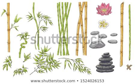 Stock photo: vector set of bamboos