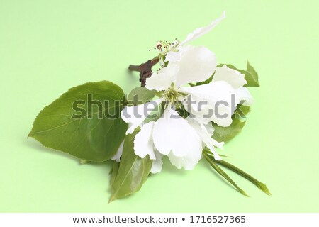 spring concept green veil of flowers stock photo © artida