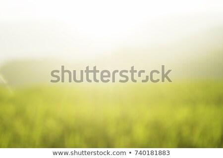 Blur background paddy field Stock photo © szefei