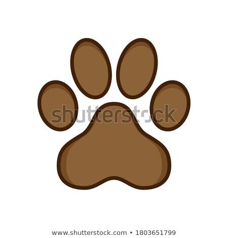 kaméleon · papagáj · macska · kutya · ikon · gyűjtemény · otthon - stock fotó © netkov1
