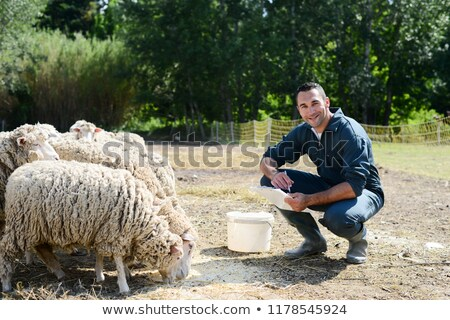 Agriculteur moutons Homme travail Photo stock © robuart