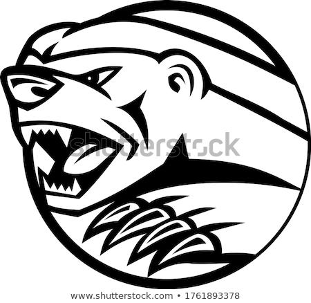 Borsuk głowie kółko maskotka ikona ilustracja Zdjęcia stock © patrimonio