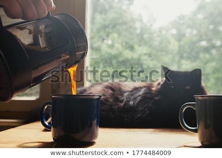 человека кофе кружка французский прессы Сток-фото © wavebreak_media