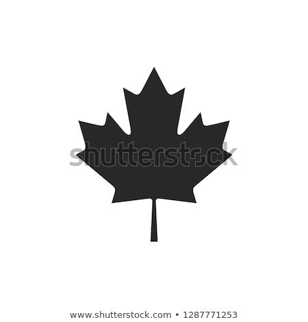 Feuille d'érable vecteur icône design feuille fond Photo stock © Ggs