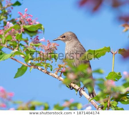 Jovem sessão florescimento arbusto ramo Foto stock © manfredxy