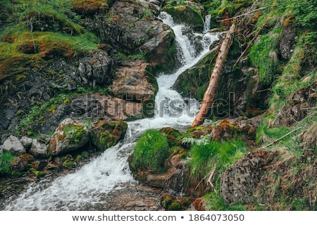 pormenor · pequeno · cachoeira · paisagem · beleza · verde - foto stock © ansonstock