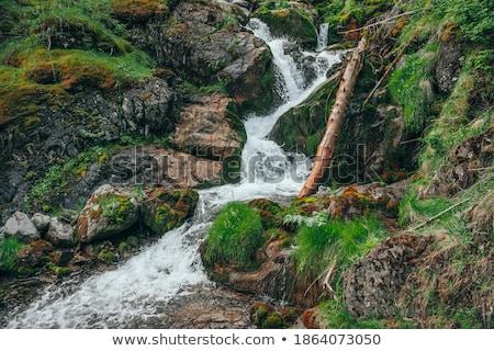 Foto stock: Pequeno · cachoeira · musgo · rochas · longo · tempo