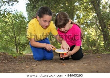 Bicho caça mata irmão meninas insetos Foto stock © tobkatrina