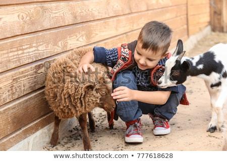 Petting zoo Stock photo © elenaphoto