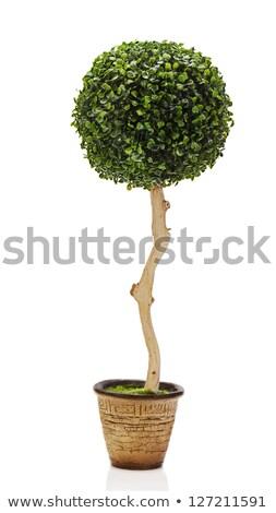 Bal groen gras Geel voetbal groene groep Stockfoto © nuiiko