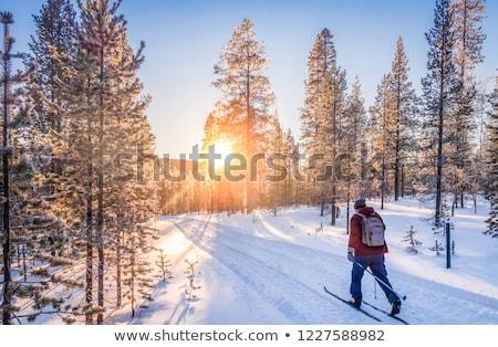 Foto stock: Homem · esqui · atravessar · neve · árvores · inverno
