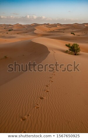 Footsteps Across Sand Dunes Stock photo © pixelsnap